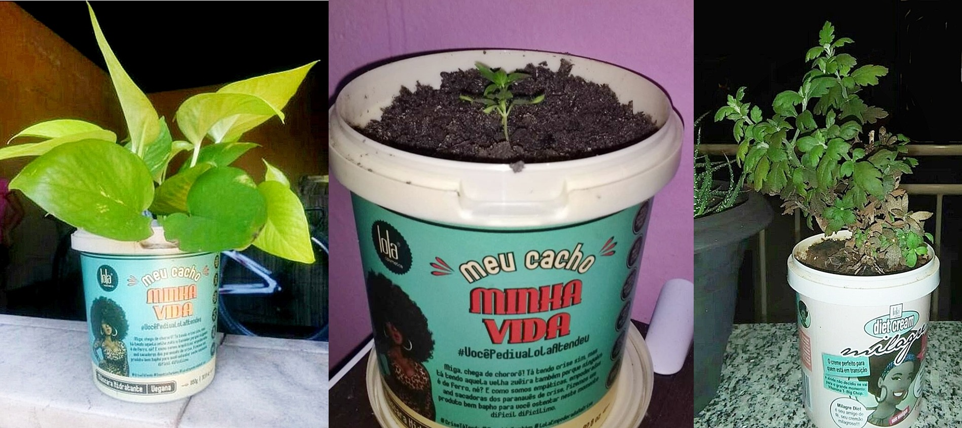 Pegada ecológica e cabelo natural: como reaproveitar embalagens como de produtos de cabelo. foto com potes da marca Lola Cosmetics com plantinhas.